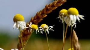 bylinky-akne-maly