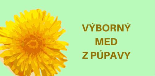 Púpava lekárska je kvet pripomínajúci slnko